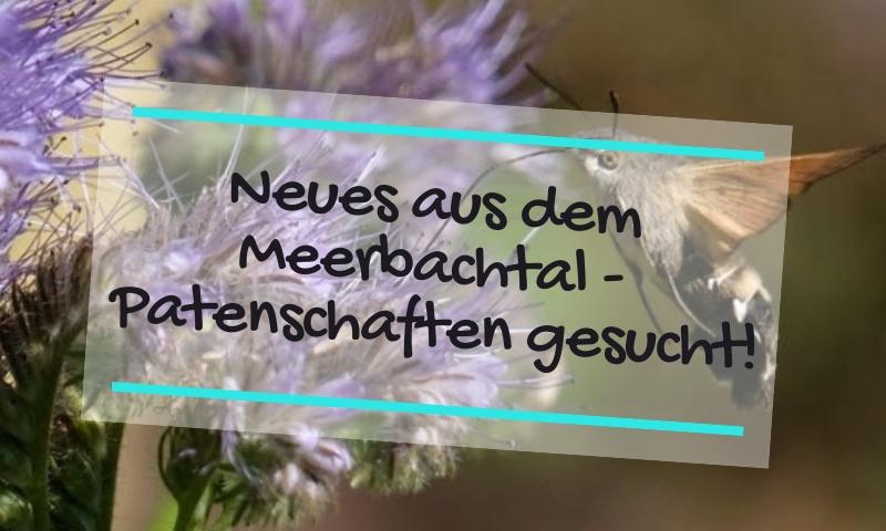 Neues aus dem Meerbachtal – Patenschaften gesucht!