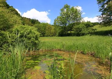 Teichanlagen