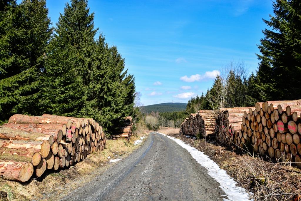 Harz - Holz