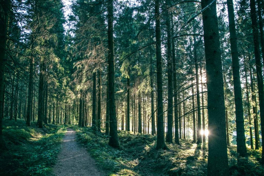 Harz - Wald