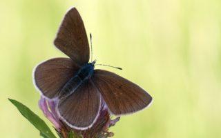 Schmetterlinge _ NABU